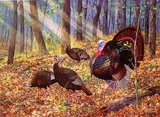 2002 Arkansas Wild Turkey Stamp Print