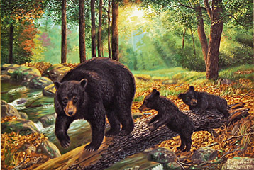 """A Walk In The Park"" - Black Bear by wildlife artist Randy McGovern"
