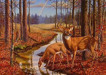 """After The Rain"" by wildlife artist Randy McGovern"