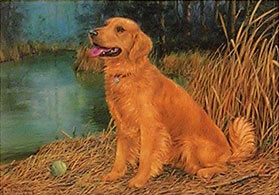 """Anticipation"" - Golden Retriever by Randy McGovern"