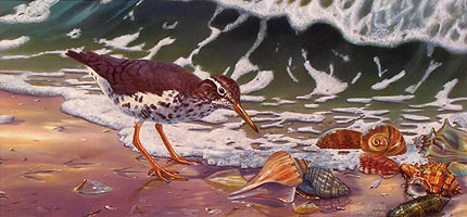 """Beach Bums"" - Sandpiper by wildlife artist Randy McGovern"