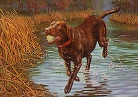 """Don't Make Me Stop"" - Chocolate Lab by Randy McGovern"