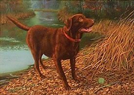 """Don't Make Me Wait"" - Chocolate Lab by Randy McGovern"