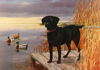 """Duckmeister"" - Black Lab by wildlife artist Randy McGovern"