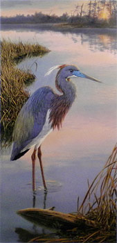 """Evening Ease"" - Tricolored Heron by wildlife artist Randy McGovern"