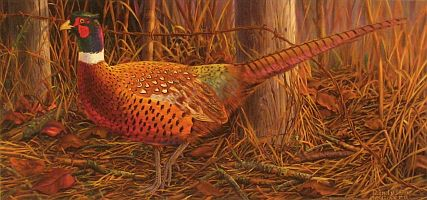 """Fence Walk"" - Ringneck Pheasant by wildlife artist Randy McGovern"