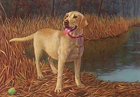 """Gaining Attention"" - Yellow Lab print by Randy McGovern"