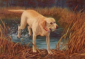 """Gaining Ground"" - Yellow Lab art print by Randy McGovern"