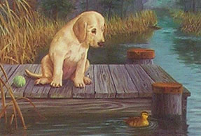 """Gaining Interest"" - Yellow Lab art print by Randy McGovern"