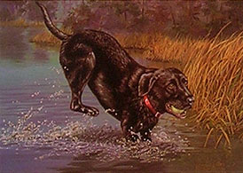 """Having A Ball"" - Black Lab by Wildlife Artist Randy McGovern"