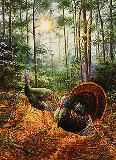 A male and female turkey walking a trail in the woods.