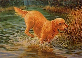 """Jubilation"" - Golden Retriever by Randy McGovern"
