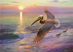 """Evening Traffic"" Brown Pelican Print - Wil"