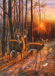 Two deer standing on a road cutting into the woods.