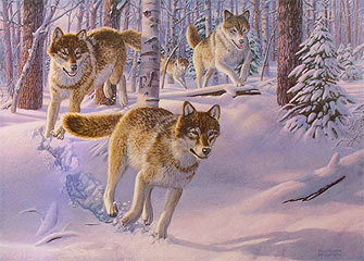 """Pack Attack"" - Timberwolves by wildlife artist Randy McGovern"