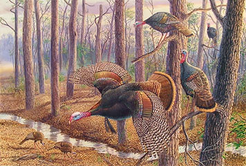 """Power And Privilege"" - Wild Turkeys by artist Randy McGovern"