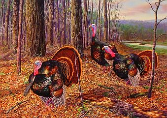 """Riding The Coattails"" - Wild Turkeys by wildlife artist Randy McGovern"
