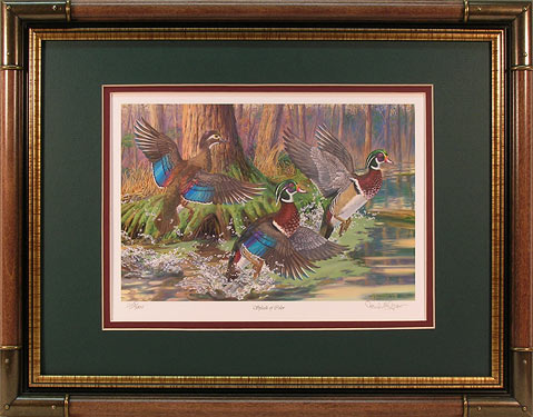 """Splash of Color"" - Waterfowl Art print by Randy McGovern"