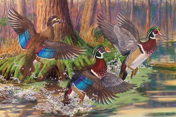 """Splash of Color"" - Wood Ducks by Randy McGovern"