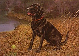 """Throw The Ball"" - Black Lab by Wildlife Artist Randy McGovern"