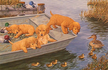 """Too Much Too Soon"" - Golden Retrievers by McGovern"
