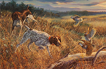 """Wake Up Call"" - German Shorthair Pointer by artist Randy McGovern"