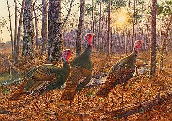 """Wise Guys"" - Wild Turkeys by wildlife artist Randy McGovern"