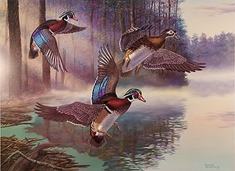 """Wood Duck Surprise"" - Wood Ducks by artist Randy McGovern"